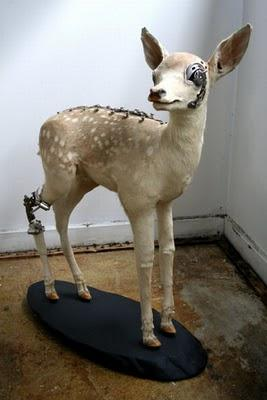 TAXIDERMY + STEAMPUNK  ARTE