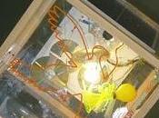 Firefly Fulvio Valsecchi, lampada potrebbe produrre energia invece consumarla...