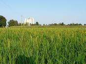 dimostrato: nutria arreca danni all'agricoltura