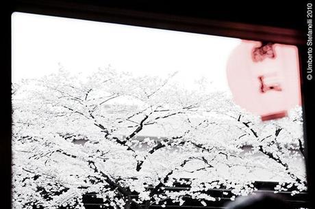 04_04_10_japan_spring_2010_mii_730_pg