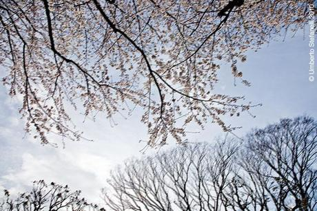 02_04_10_japan_spring_2010_mii544_pg