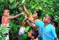 Bambini al villaggio di Nakawakawa raccolgono chicchi di caffe'