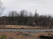 foresta rossa Chernobyl