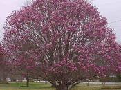 L'albero Giovanni Falcone