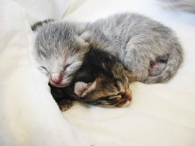 Ecco i gattini appena nati paperblog for I gattini piccoli