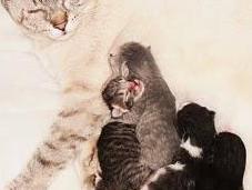 Come nascono gattini