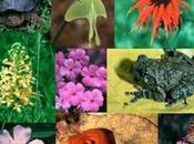 Biodiversità rischio, nonostante sforzi