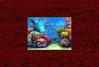 Trasformare il desktop del pc in un acquario tropicale for Sfondo animato pesci
