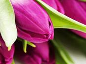 Wallpapers: deliziosi sfondi tulipani multicolore
