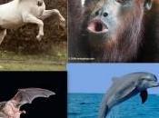Storie sesso animalesco