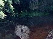 Ragnatela gigante scoperta Madagascar