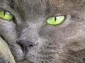 Milano: scoperta truffa gatti certosini