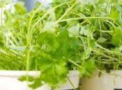 delle erbe aromatiche