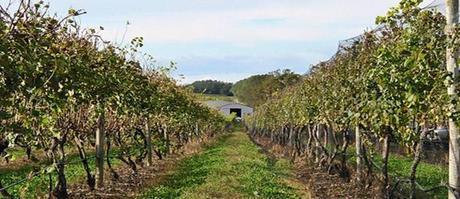 elenco vitigni italiani