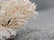 crescente minaccia funghi