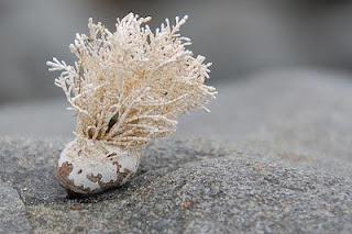 La crescente minaccia dei funghi