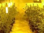 Madre figlio coltivano marijuana serra Arrestati Sant'Elia