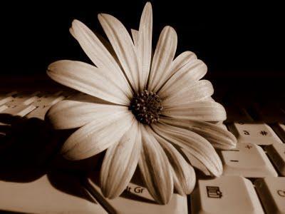 Due anni con Paperblog, un'esperienza da valorizzare