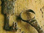 Chiavi, lucchetti serrature nell'antichità