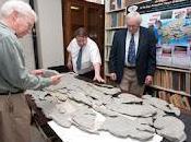 Fossile misterioso scoperto paleontologo amatoriale