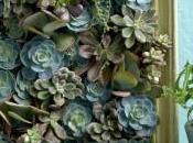 Mini giardino verticale piante grasse