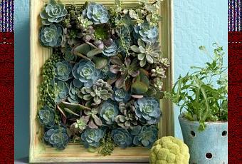 Mini giardino verticale di piante grasse paperblog - Composizione piante grasse giardino ...