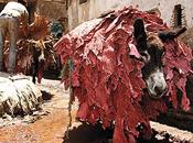 Medina Marrakech: anarchia sogno