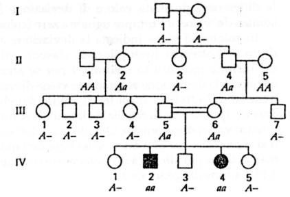 alberi genealogici i simboli paperblog