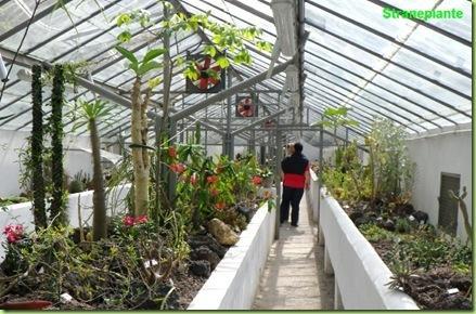Era di maggio all orto botanico di roma paperblog for Serra piante grasse
