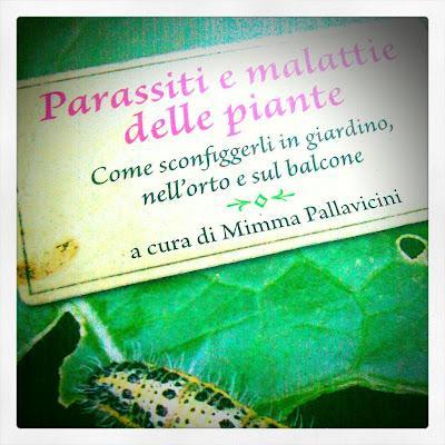 Parassiti e malattie delle piante di mimma pallavicini for Parassiti piante