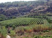 vino mondo nuragico