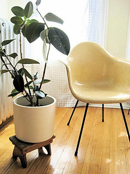 Le piante di casa purificano l aria paperblog - Piante che purificano l aria in casa ...