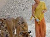 Vivere tigri: Tempio della Foresta