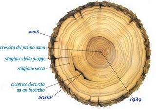 è la precisione di datazione anello albero