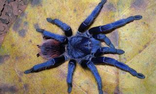 Nuove specie scoperte nel 2011