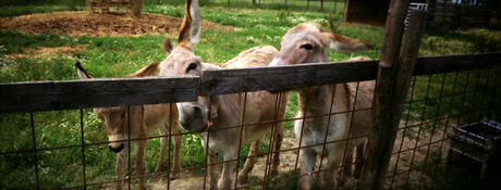 Animali in panorama