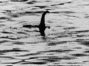 Storia fotografia: mostro Loch Ness