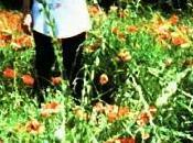 "Poppies Mode: (#4) poppies ""vertical horizon"""