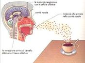 profumo ricordi: meccanismo dell'olfatto