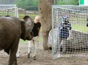 Dopo polpo Paul,ora l'elefantessa Nelly Germania Italia pronostica…