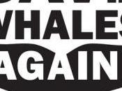 Summit Panama, Giappone blocca creazione della riserva balene nell'Antartico