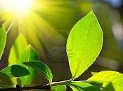 Acqua, anidride carbonica, luce, ossigeno glucosio. Questa fotosintesi? Dietro molto più...