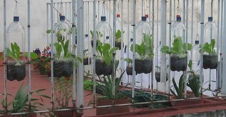 Riciclare bottiglie di plastica paperblog for Vasi con bottiglie di plastica
