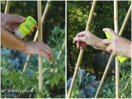Zanzare nell orto paperblog for Laghetto giardino zanzare
