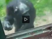 Scimmia chiede aiuto turista evadere dallo (video)