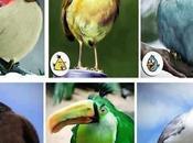 Angry Birds mondo reale