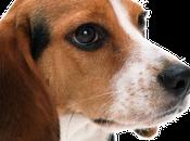 beagle scampati alla macelleria, Kennedy morti altre storie