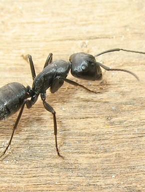 Rimedi naturali contro le formiche paperblog for Rimedi naturali contro le formiche bicarbonato