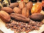 Maya cioccolato