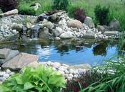 Come creare laghetto proprio giardino